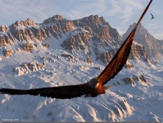 aigle en montagne