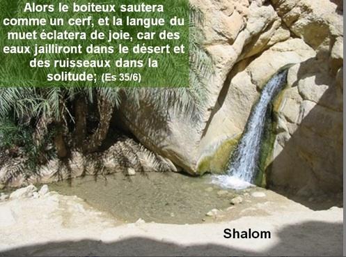 Une rivière réapparaît au beau milieu d'un désert aride en Israël !!! Boiteux-sautera