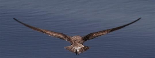 oiseau-med