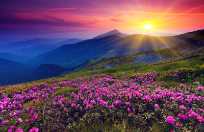 131931__mountains-flowers-sunrise-sun_p