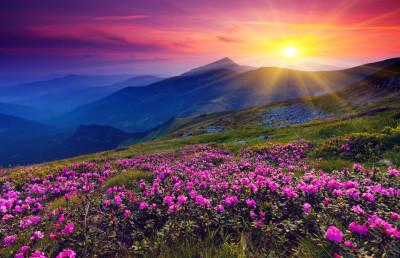 131931__mountains-flowers-sunrise-sun_p